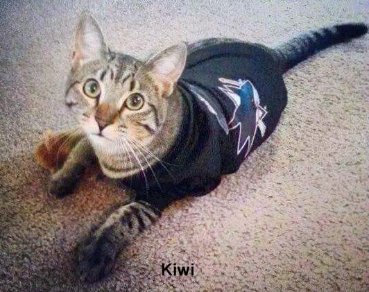 BFF/Sharks Fan:  Kiwi