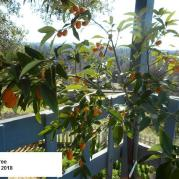 CONJUNGLE-Kumquats (1.28.2018)-2