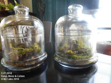 GRNHOUSE Fungi, Moss & Lichen (12718)-1