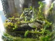 GRNHOUSE Fungi, Moss & Lichen (12718)-3