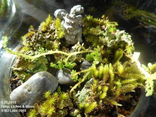 GRNHOUSE Fungi, Moss & Lichen (12718)-4