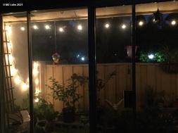 CONJUNGLE - at night (9.29.2021)-1